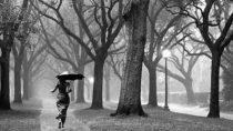 Wayne Gratz – Wind and Willow