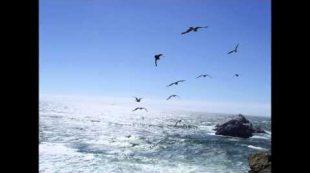 Flight of the Seagull by Wayne Gratz