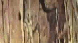 Opus 14-Dustin O'Halloran-video by Stefano Mandracchia